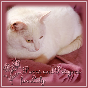 Purrs & Prayers Request for Lily