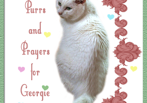 Purrs and Prayers Request for Georgie