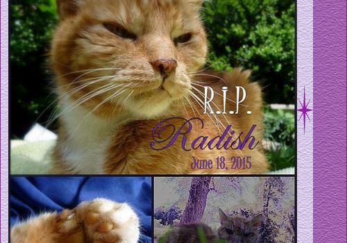 Rest In Peace, Radish