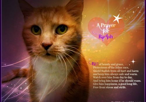 Purrs and Prayers Request for Radish