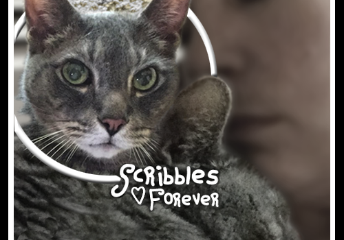 Rest In Peace, Scribbles