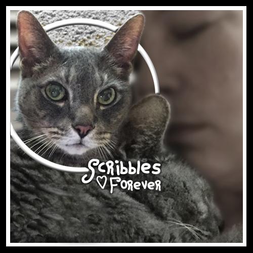 Scribbles Forever