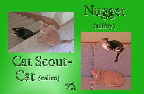 Cat-Nugget_resized
