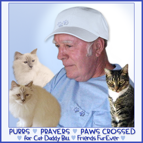 Purrs and Prayers for Bill, Friends FurEver