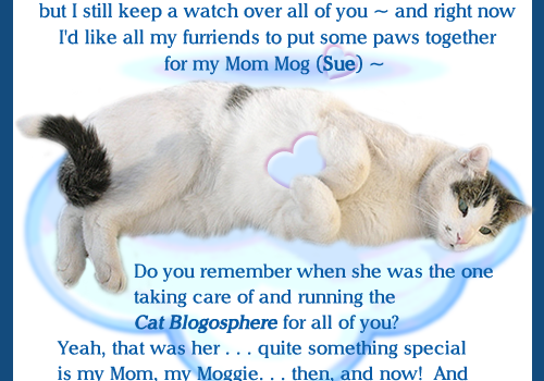 Purrs and Prayers Request for Mog