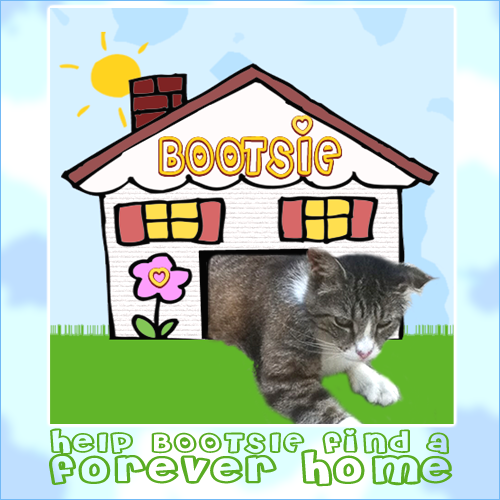 Bootsie Needs A Forever Home (PostSize)