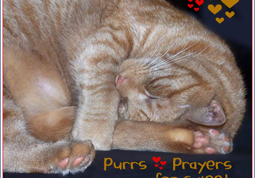 Purrs and Prayers Request for Billy SweetFeets