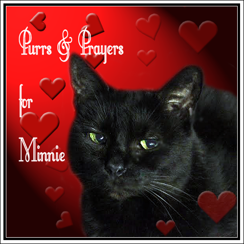 Purrs and Prayers for Minnie