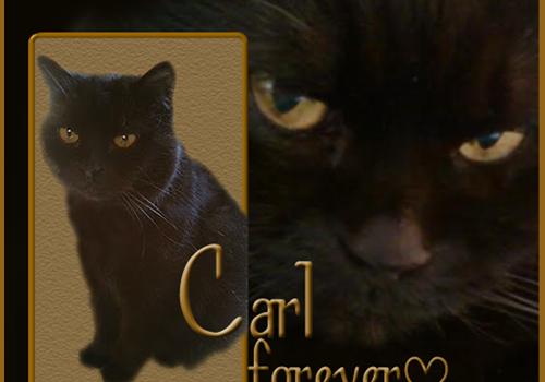 Rest In Peace, Carl