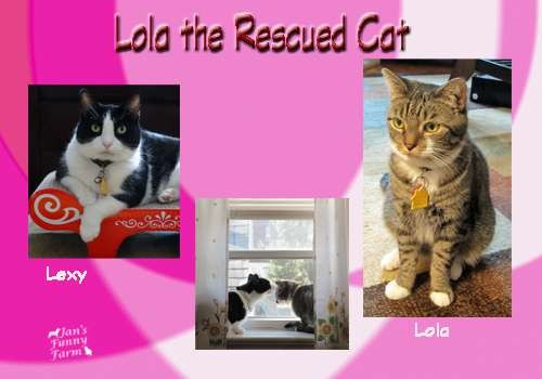 Funny Farmer Felines Interview Lola the Rescued Cat