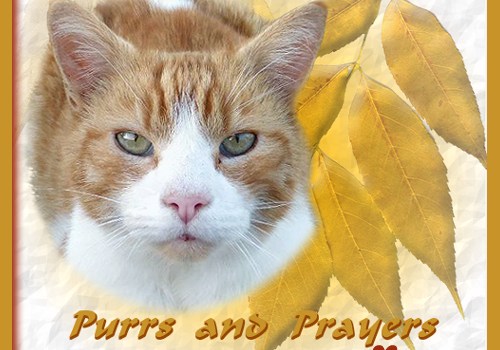 Purrs and Prayers Request for Flynn