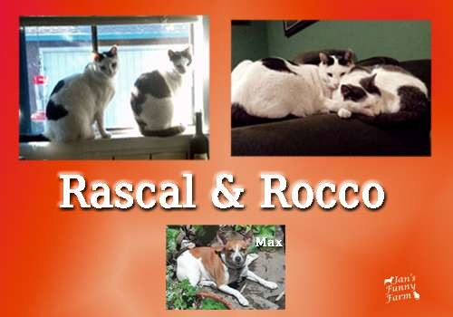 Funny Farmer Felines Interview Rascal and Rocco
