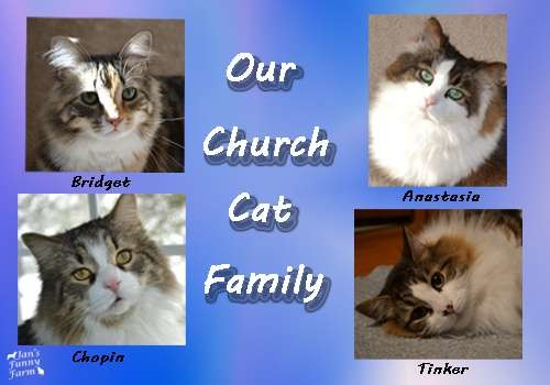 Funny Farmer Felines Interview the Church Cats