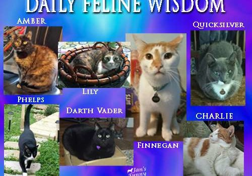 Funny Farmer Felines Interview Daily Feline Wisdom