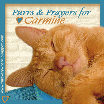 Purrs and prayers for moo
