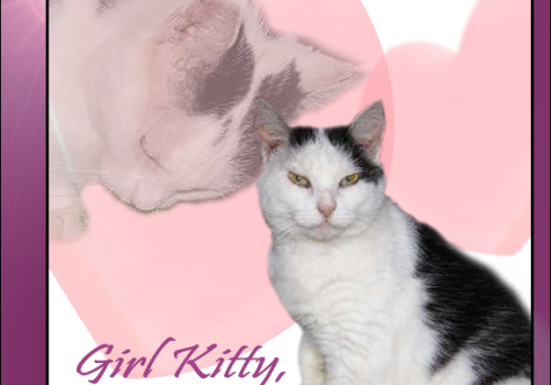 Rest In Peace, Girl Kitty