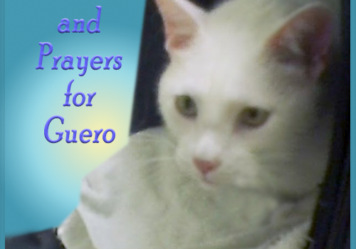 Purrs and Prayers for Guero
