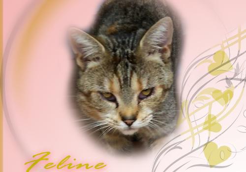 Rest In Peace, Feline