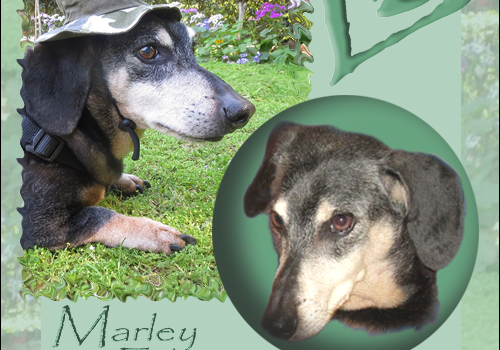 Rest In Peace, Marley