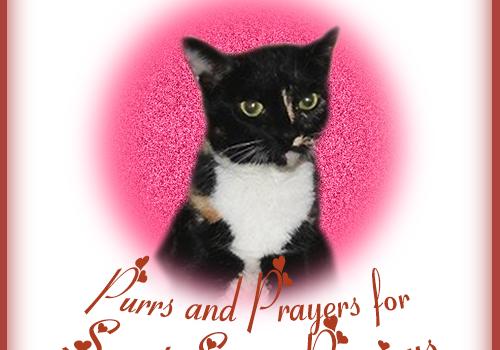Purrs and Prayers for Precious