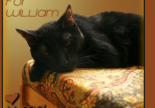 Purrs and Prayers Request for William