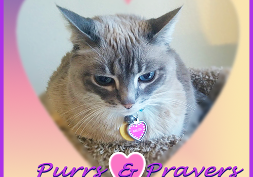 Purrs and Prayers Request for Milita