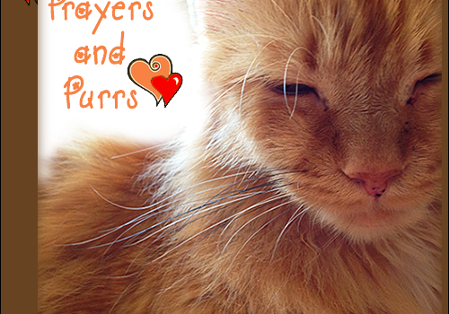 Purrs and Prayers Request for Toby