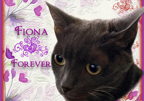 Rest In Peace, Fiona