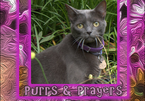 Purrs and Prayers Request for Fiona