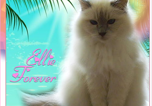 Rest In Peace, Ellie