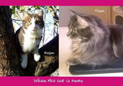 Funny Farmer Felines Interview Tessa and Kajsa