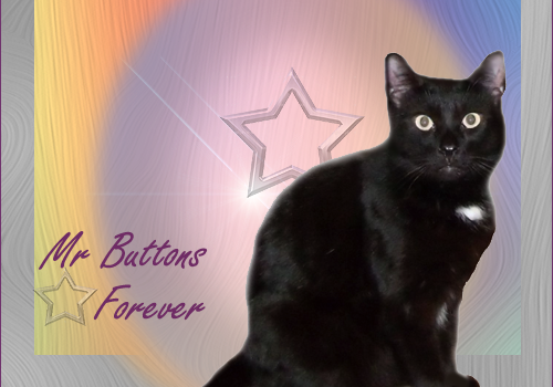 RIP Mr. Buttons