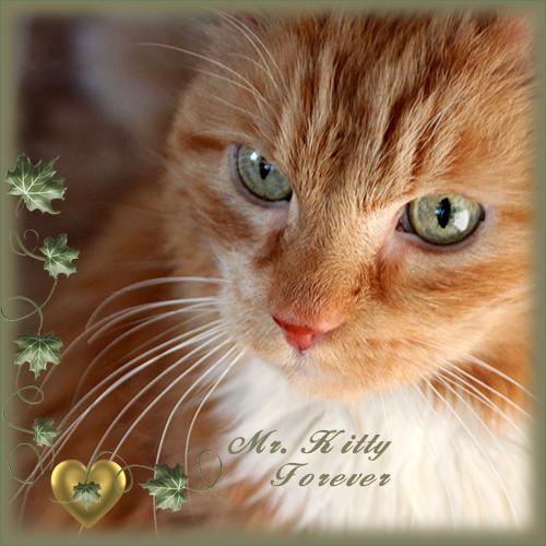 RIP Mr. Kitty