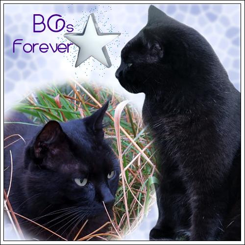 BGs Forever