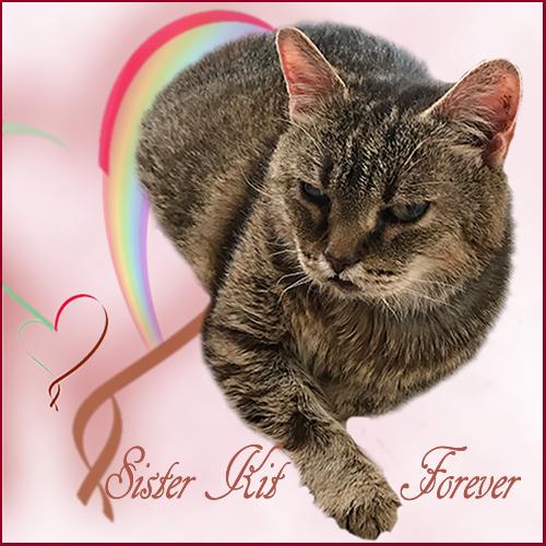 Sister Kit, Forever