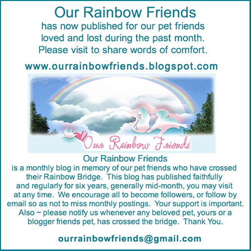 Our Rainbow Friends For December 2018