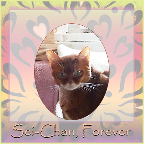 Sei-Chan Forever