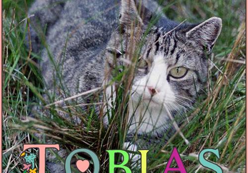 Tobias Forever