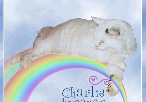 Charlie Forever
