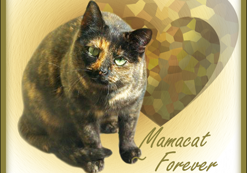 Mamacat Forever