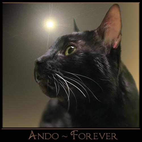 Ando Forever