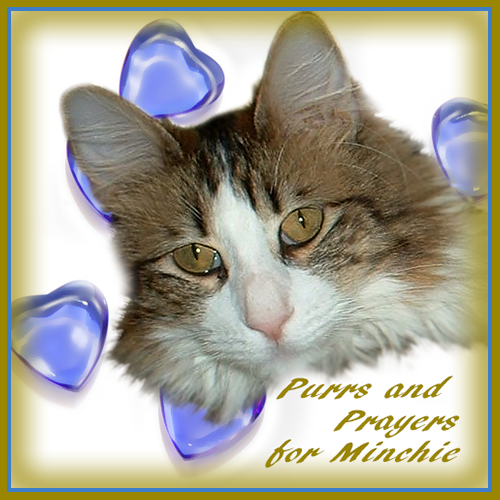 Purrs And Prayers For MINCHIE