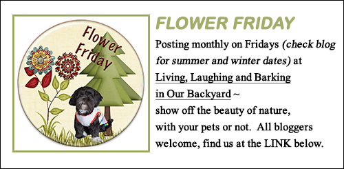 Flower Friday Blog Hop