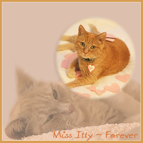 Forever Miss Itty
