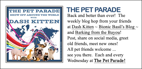 The Pet Parade