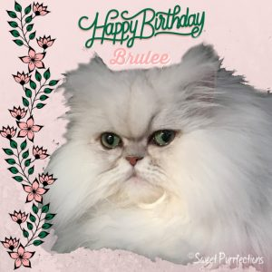 Please Join Us In Wishing Brulee From Sweet Purrfections A Happy 7th Birthday Visit Her Blog Today And Leave Your Best Wishes