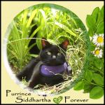 Purrince Siddhartha