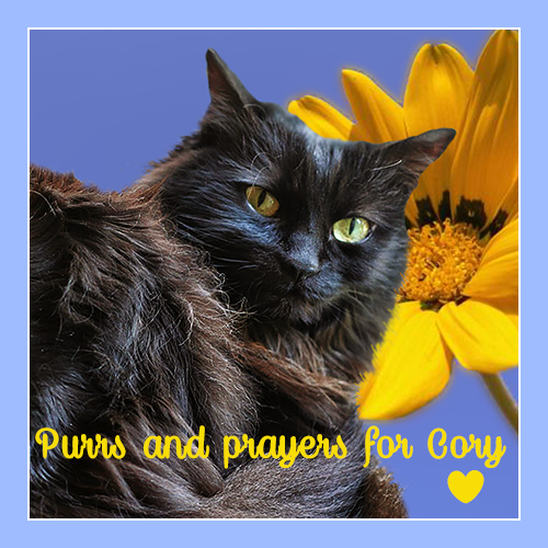 Purrs And Prayers For Dear Cory