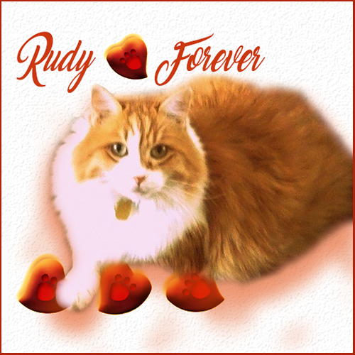 Rudy Forever