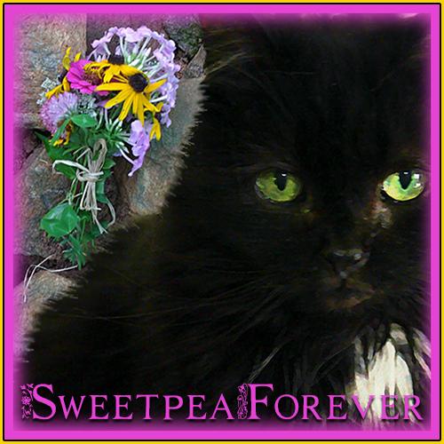 Sweetpea Forever